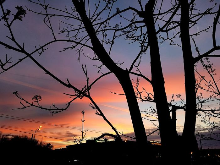 Low angle view of silhouette trees against orange sky