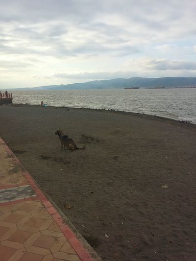 Turkey Degirmendere Sea And Sky Summer Dogs End Of Summer Seaside Nature_collection Human Vs Nature Beach