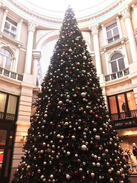 X'mas is just in corner Christmas Tree