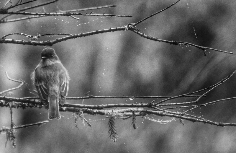 EyeEm Nature Lover Bw_collection Blackandwhite Winter White By CanvasPop