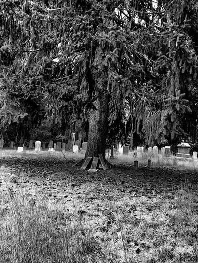 Tree Nature Growth Tree Trunk Tranquility Scenics Cemetery_shots Cemetery Quaker Cemetery Secluded  Blackandwhite Black & White Blackandwhite Photography Black And White Photography Blackandwhitephotography Black&white