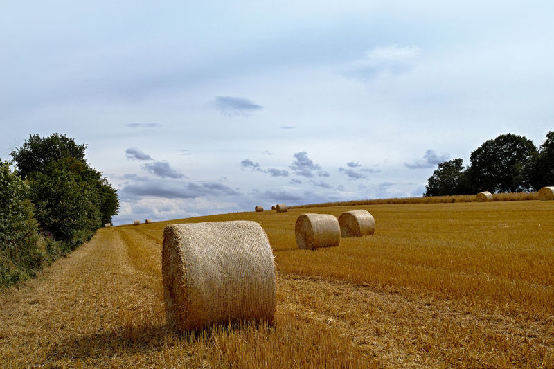 Plant Hay Bale  Agriculture Land Landscape Field Tree Rural Scene Sky Tranquil Scene Farm Rolled Up Tranquility Cloud - Sky Nature Beauty In Nature Harvesting Environment Day No People Stoppelfelder Nach Der Ernte Rundstrohballen