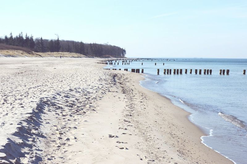Baltic Sea landscape of Darss peninsula (Mecklenburg-Vorpommern, Germany) in springtime. Baltic Sea Baltic Sea Winter Beach Darß Darß Dunes Germany Groyne Horizon Over Water Landscape Mecklenburg-Vorpommern Non-urban Scene Ocean Sand Sea Shore Sunny Tide Tourism Vacations Water Wave