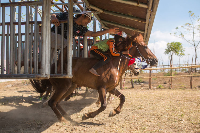 Sumbawa Besar, Indonesia - September 21, 2017: Local horse race competition held on Sumbawa Island in Sumbawa Besar, Indonesia on September 21, 2017. Children Horses INDONESIA Kids Local Sumbawa Sumbawa Besar TRENDING  Travel Travel Photography Authentic Child Equestrian Genuine Horse Horse Racing Rivalry Speed Traditional Travel Destinations