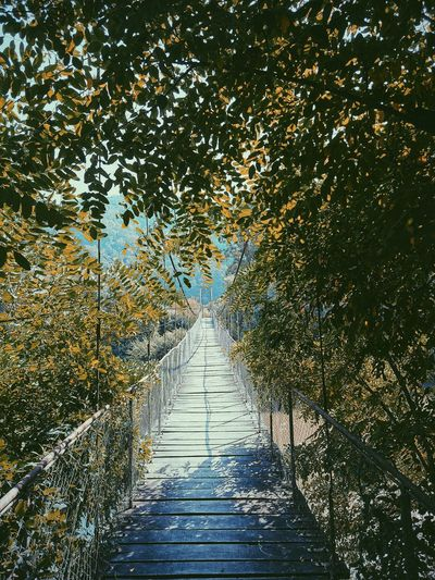 Narrow footpath amidst trees in forest