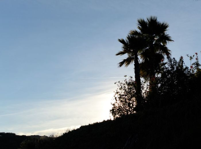 California Tree Sky Plant Silhouette Growth Tranquility Low Angle View Cloud - Sky Tranquil Scene Nature Beauty In Nature Scenics - Nature Sunset Outdoors Non-urban Scene Palm Tree Copy Space Idyllic