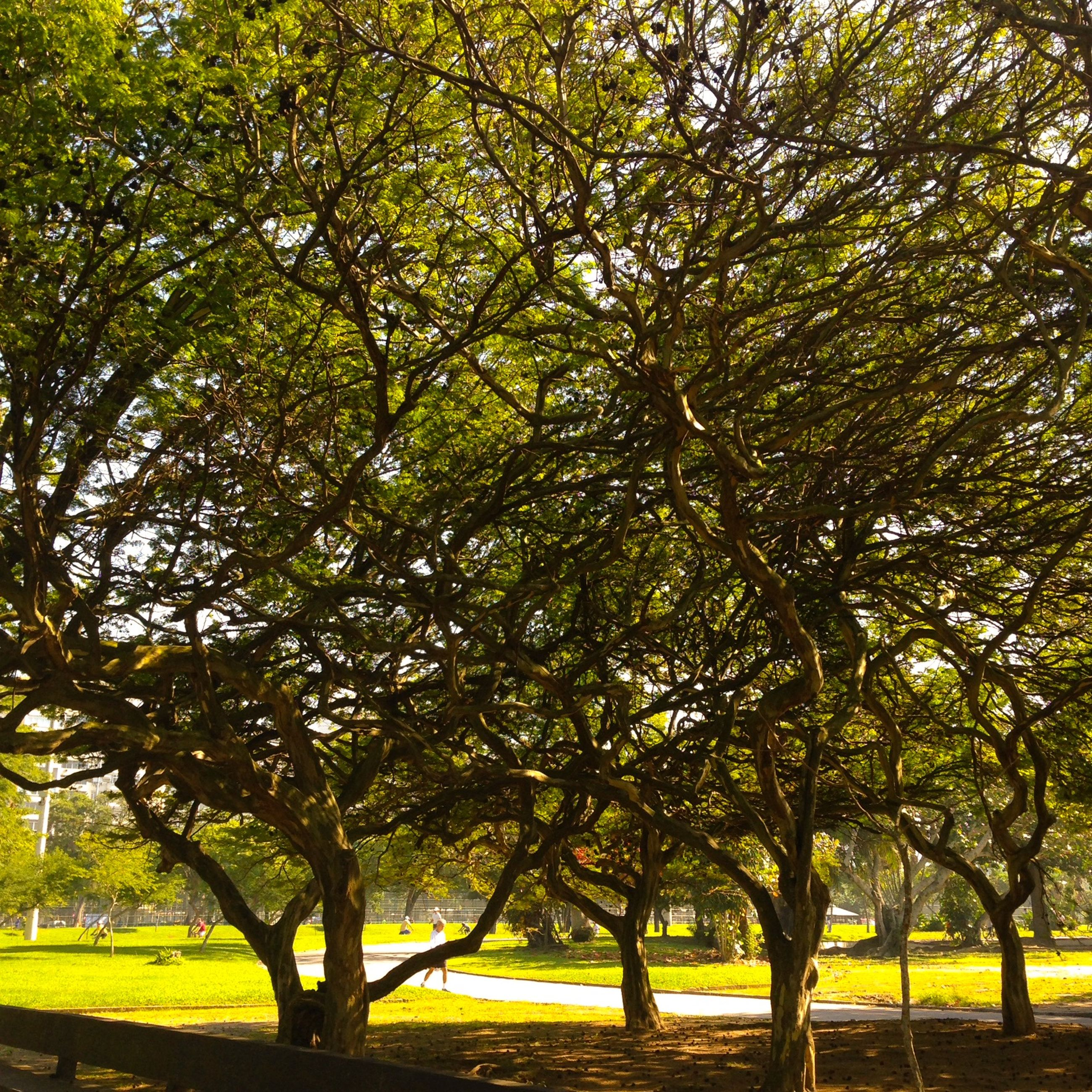 tree, tranquility, branch, growth, park - man made space, tree trunk, tranquil scene, beauty in nature, nature, scenics, park, green color, sunlight, grass, water, idyllic, shadow, outdoors, treelined, sky