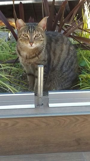 Cat Bahcesehir