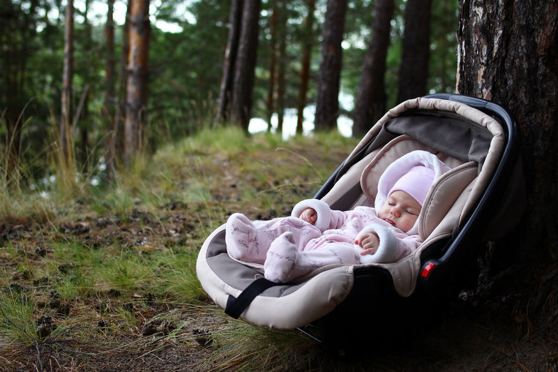 Close-up of baby in carriage against tree trunk in forest