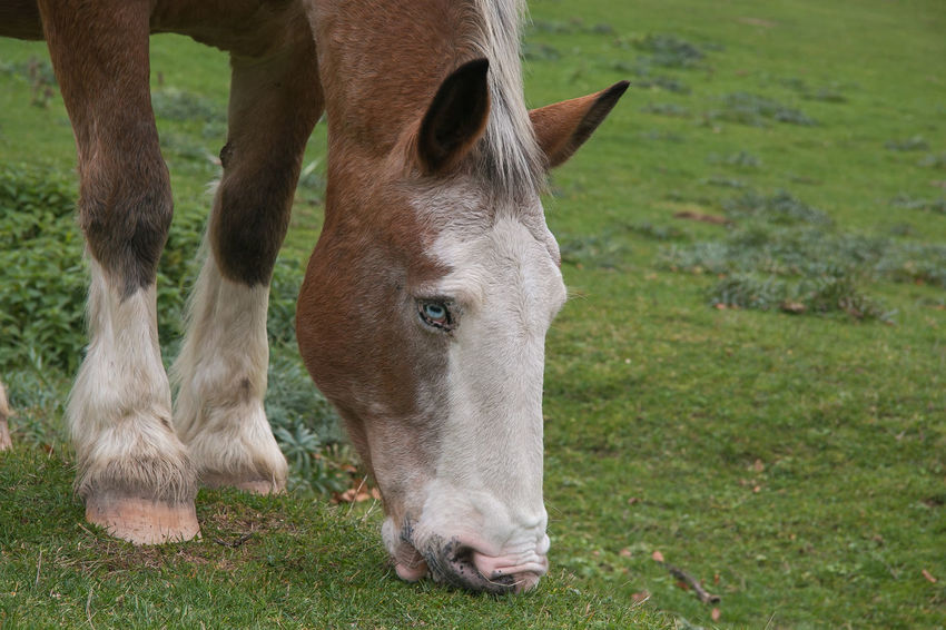 Close up of wonderful horse with blue eyes Animals In The Wild Grazing Man Pasture Animal Animal Body Part Animal Head  Animal Themes Animal Wildlife Apennines Blue Eys Domestic Animals Equestrian Equine Grass Horse Land Livestock Mammal Monte Cucco Mountain Nature One Animal Umbria Vertebrate