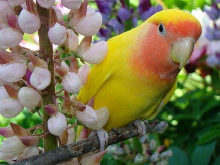 My parrot Roxy 😊💓🐦