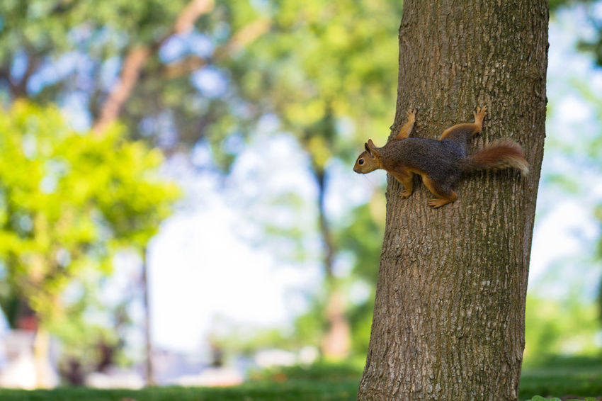 Squirrel on the tree Animal Themes Animal Wildlife Animals In The Wild Branch Close-up Day Focus On Foreground Mammal Nature Nature Photography No People One Animal Outdoors Park Squirrel Theme Park Tree Tree Tree Trunk Tree Trunk