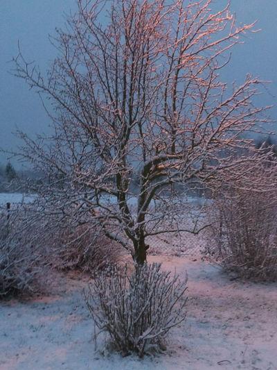 Tree , Snow , Winter , Drzewo, śnieg , Zima First Eyeem Photo