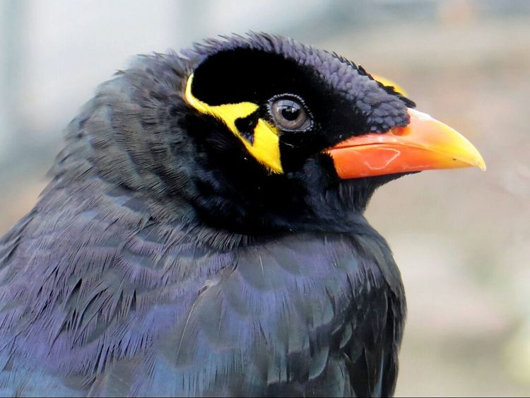 Birds_collection Beo Macro Photography Beautiful Birds BirdLovers Hi! Bird Photography