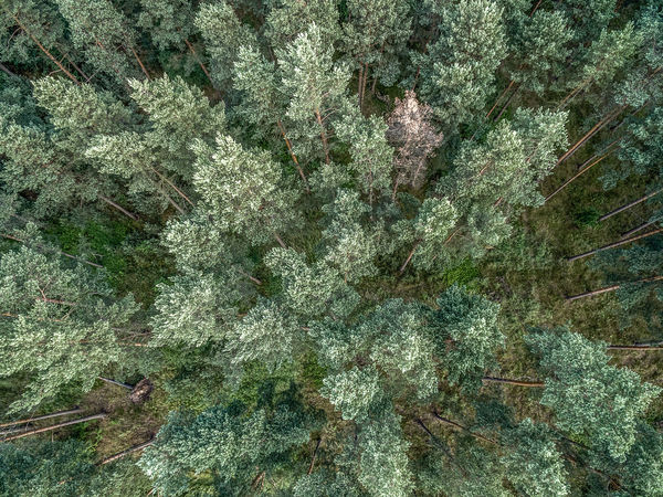 Coniferous forest, aerial photo with the copter, vertically down, abstract effect Aerial Shot Pine Aerial Aerial Photography Aerial View Air Backgrounds Close-up Day Full Frame Green Color Growth Leaf Nature No People Outdoors Pine Woodland Plant Textured  Tree