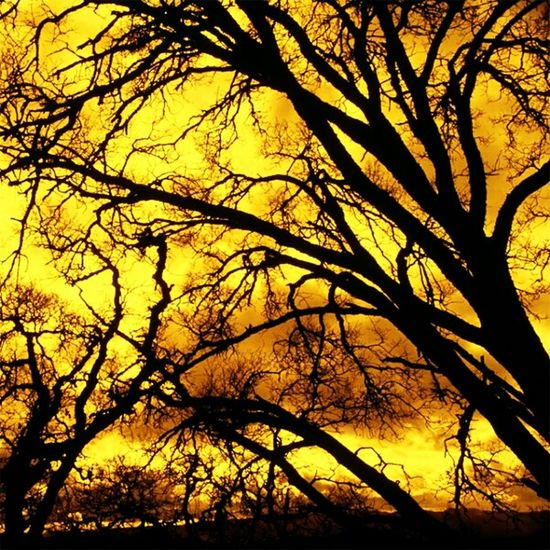 Paint The Town Yellow Tree Nature Branch Beauty In Nature Outdoors Sunset Backgrounds No People Growth Sky Day Autumn