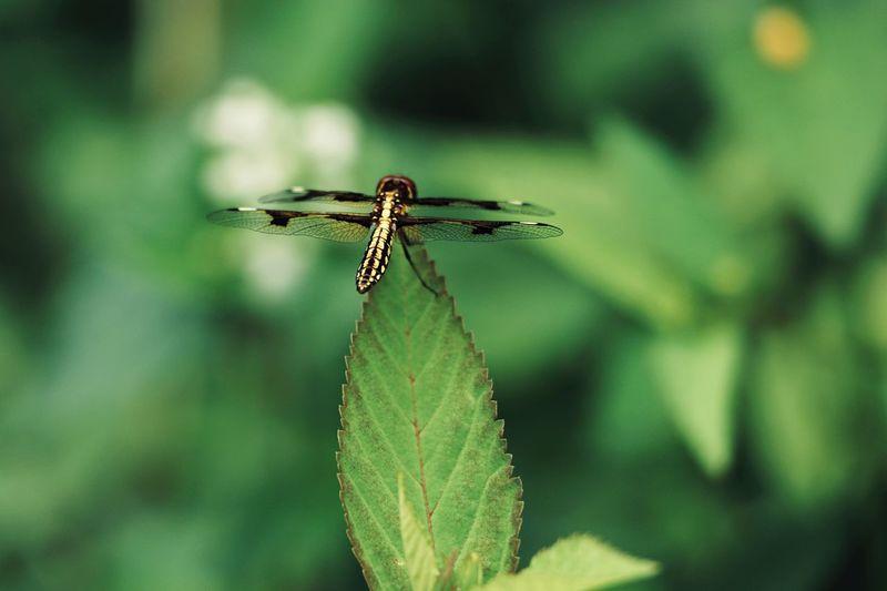Firefly on leaf