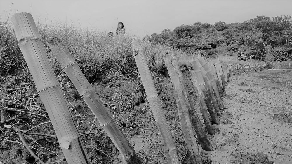 kids and bamboo fence Bamboo Bamboo Fence Beauty In Nature Black And White Black And White Collection  Black And White Photography Fence Kids Kids Photography Outdoor Photography Outdoors Real People