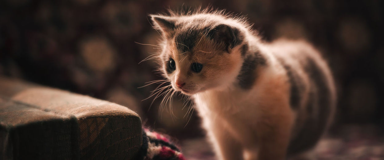 Animal Themes Close-up Day Domestic Animals Domestic Cat Feline Focus On Foreground Indoors  Mammal Morning Light No People One Animal Pets Whisker First Eyeem Photo