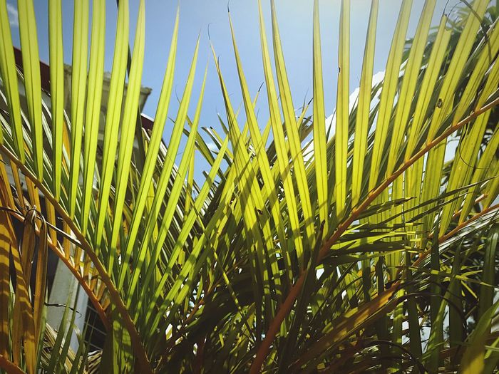 Green Color Green Textures and Surfaces Natural Beauty colour of life Colors Nature Photography EyeEm Nature Lover Nature Naturelovers EyeEmBestPics EyeEm Gallery EyeEm Best Shots From My Point Of View Growth Plant Green Color No People Nature Beauty In Nature Day Sunlight Outdoors Leaf Close-up Tree Tranquility Palm Tree Plant Part Tropical Climate