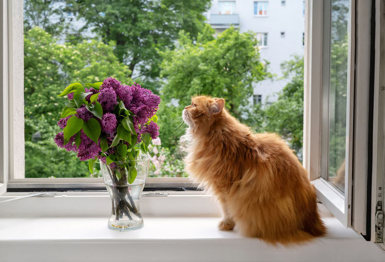View of cat on window sill