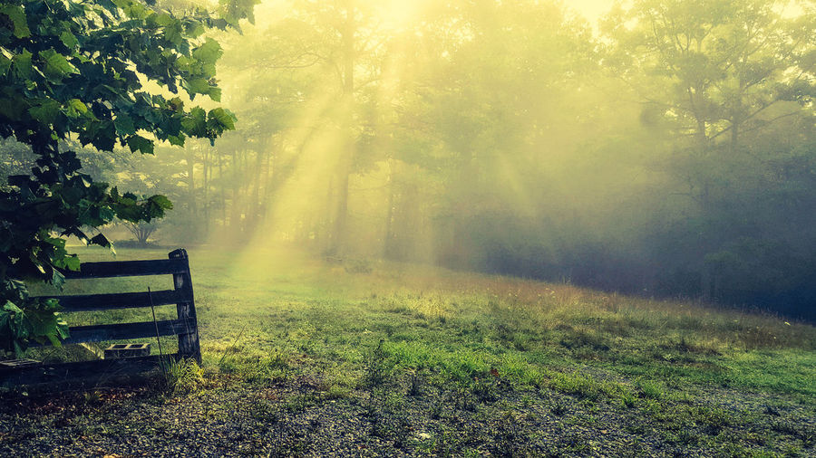 Morning on the mountain, fog, sun, rays, light, country, dawn, old fence, antique, nostalgic Tree Nature Beauty In Nature Sunlight No People Scenics Outdoors Grass Day Freshness Pixelated Forest Growth Field Landscape Tranquility Tranquil Scene