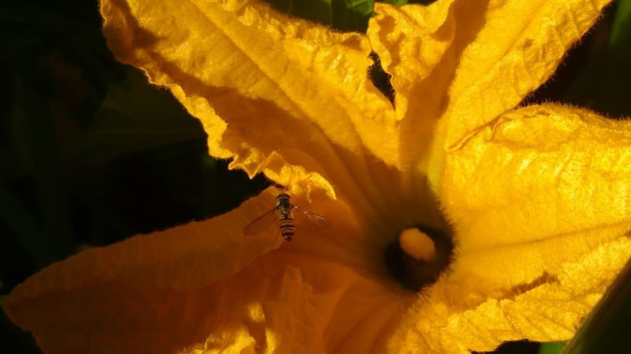 Little helper. Bee Flower Flower Head Yellow Beauty Close-up Sky Blooming In Bloom Single Flower