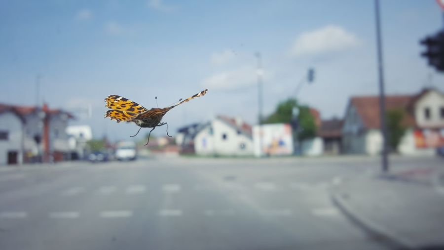 Close-Up Of Butterfly Flying Over Street