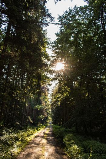 Waldweg im