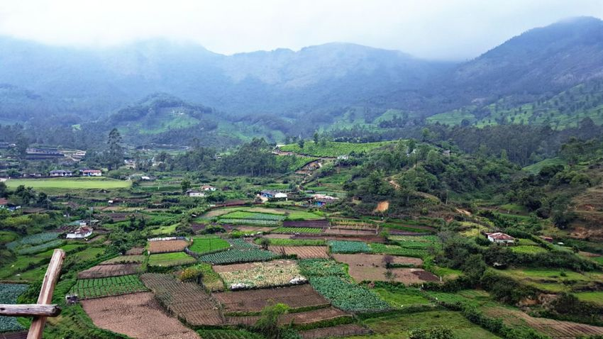 Agriculture Landscape Rural Scene Nature Farm Tree Field Outdoors Crop  Scenics High Angle View Terraced Field Tea Crop Fog Mountain Beauty In Nature Social Issues Day No People Rice Paddy EyeEm Selects EyeEmNewHere Perspectives On Nature Postcode Postcards