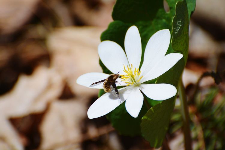 Unknown Insect No People Check This Out Nature