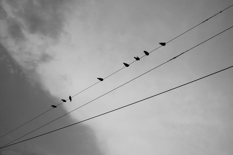 Eight pigeons or birds perched on the electric wire