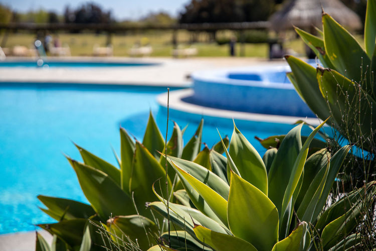 Close-up of plants by swimming pool