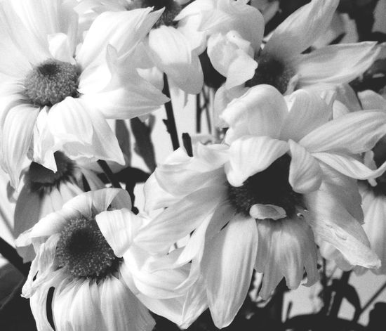 Beauty Among The Wilted  Flowers Blackandwhite EyeEm Nature Lover