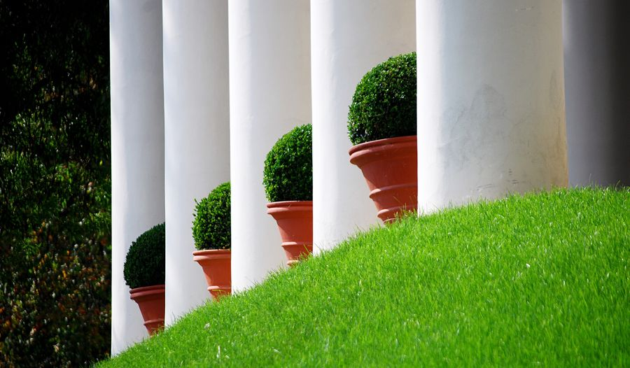 Green Color Growth Architectural Column Grass Architecture Built Structure Plant Tree No People Day Outdoors Nature Building Exterior Close-up Column Bouquet Plants Prague Praha Order Garden Garden Photography Gardens Garden Architecture