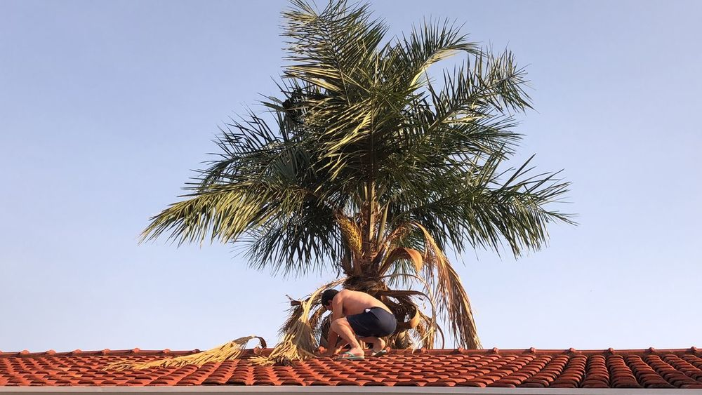 Working Blue Sky Blue Landscape EyeEm Best Shots EyeEm Nature Lover Sky Tree Plant Architecture Low Angle View Clear Sky Built Structure Roof Palm Tree Building Belief Tropical Climate Building Exterior Growth Nature Day