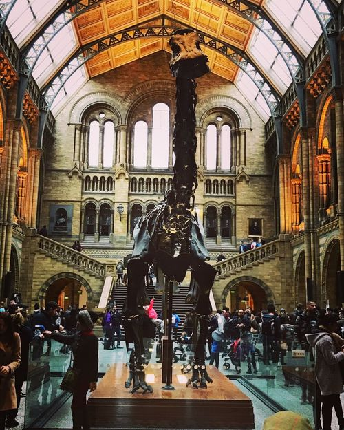 Natural History Museum Dinosaur Travel Destinations People Arch London Dippy Diplodocus Travel Tourist Tourist Attraction  History