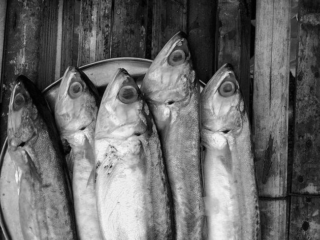 Mackerel Mackerel Fish Close Up Close Up Photography Close Up Collection Close Up Fish Black And White Black And White Photography Black And White Collection  Black And White Fish Fish Food