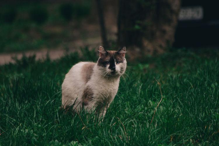 Portrait of a cat on field