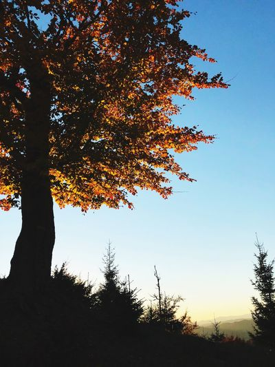 Tree Nature Outdoors Sunset Day Sunlight Clear Sky No People First Eyeem Photo