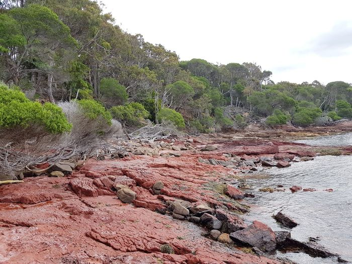 Ben Boyd Ben Boyd National Park Nsw New South Wales  Bittangabee Bay Beach Australia Coastline Red Rocks  Agriculture Day Growth No People Outdoors Nature Rural Scene