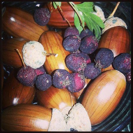 Еда ягоды боярышник желуди натюрморт Природа красиво цвет зеленый Коричневый фиолетовый Food Berry Hawthorn Acorns Colours Brown Green Violent Nature Autumn осень