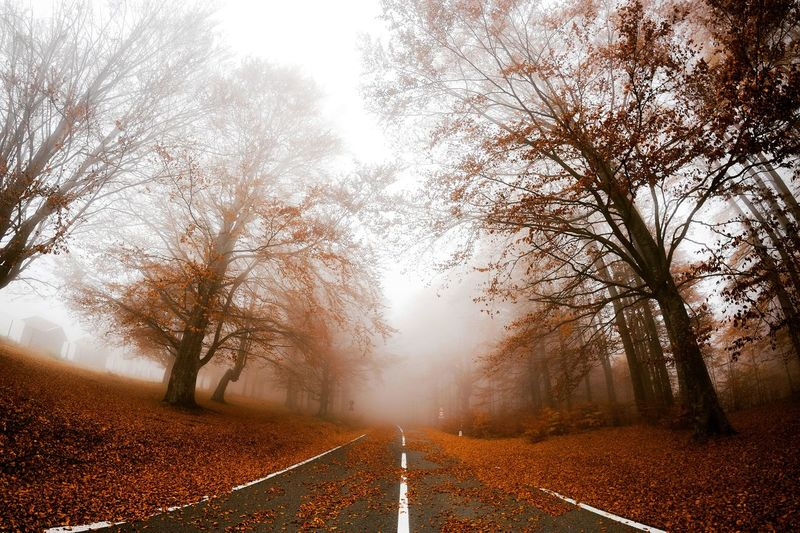 Tree Autumn The Way Forward Fog Scenics Nature Leaf Change No People Road Landscape Rural Scene Outdoors Beauty In Nature Growth Sky Day Bare Tree Branch