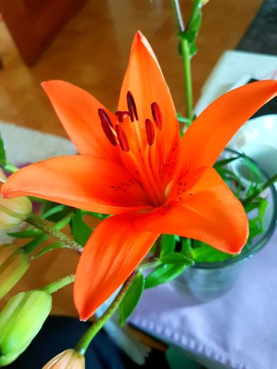 Flower Day Lily Day Petal Flower Head Freshness Beauty In Nature Fragility Nature Close-up Growth No People Plant