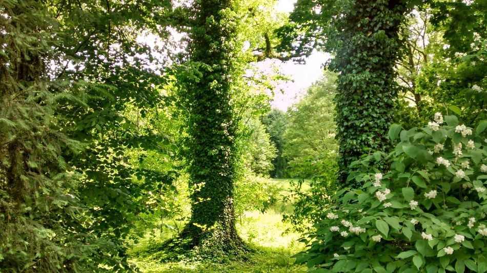 Green Woods Summer Nature EyeEm Nature Lover Nature_collection Beauty Forest Park Traveling