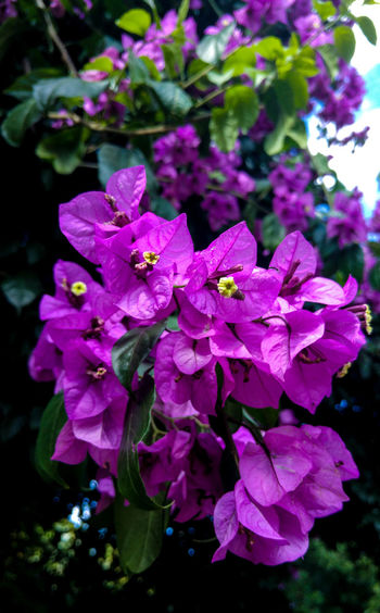 Flower Freshness Purple Nature Beauty In Nature Flower Head Fragility Petal Growth Blooming Plant Close-up No People Outdoors Water Day