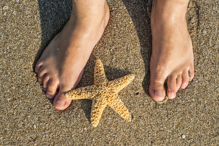 Low section of person standing by starfish on sand at beach