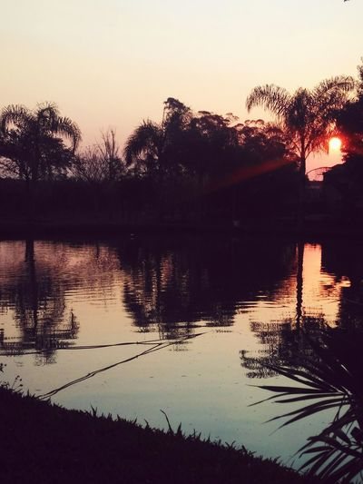 Sunset Sunlight Nature No People Pond Pond Reflections Reflections Sun Pink Tree