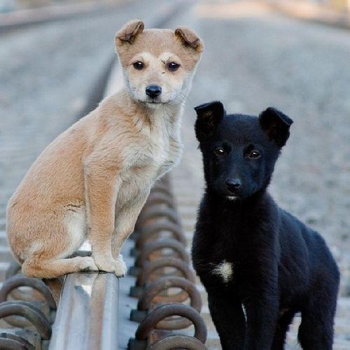 Нам на паспорт. Вдвоем. щенок солнечно дневник_наблюдателя Puppy sunny insta_dogs kiev kievblog insta_kiev syrets сырец cool_pics
