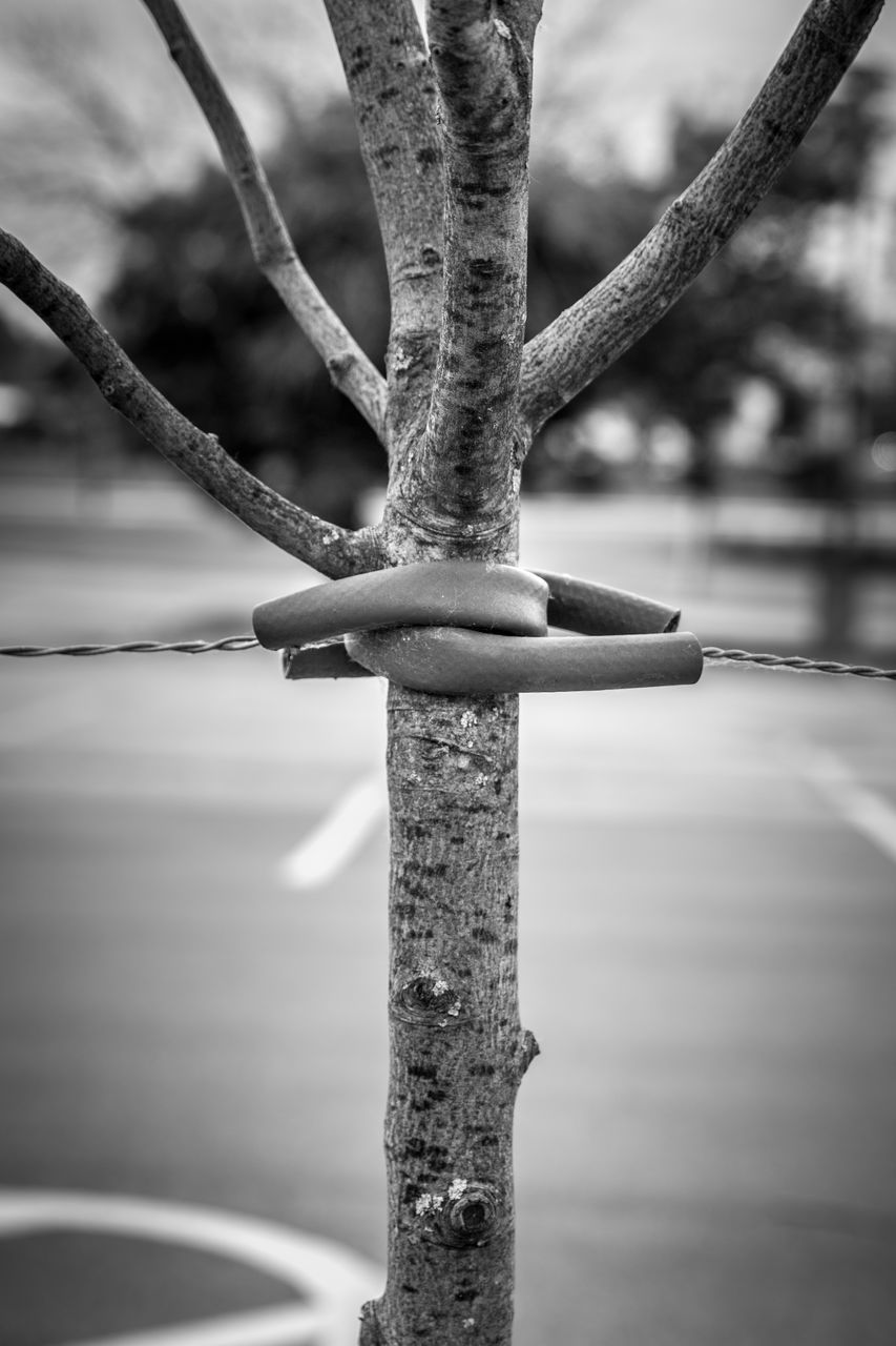 metal, focus on foreground, close-up, day, no people, outdoors, protection, nature, rusty, security, strength, tree, fence, safety, boundary, water, barrier, connection, selective focus, rope